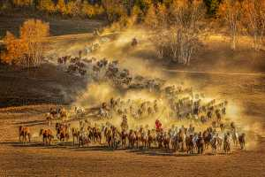 PhotoVivo Honor Mention e-certificate - Yuk Fung Garius Hung (Hong Kong)  Running Horses 8