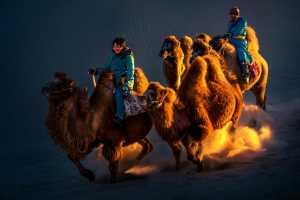 SIPC Bronze Medal - Xueping Cui (China)  Desert Camels