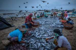 PhotoVivo Gold Medal - Guoxiang Sun (China)  Kill Fishes