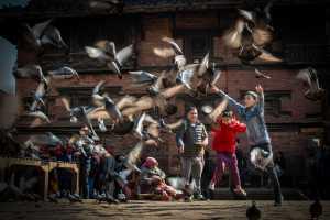 Circuit Merit Award e-certificate - Chyong Yau Lin (USA)  Naughty Kids Chasing Pigeons
