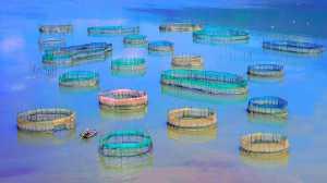 Circuit Merit Award e-certificate - Chin-Fa Tzeng (Taiwan)  Discuss Life With The Sea Circle