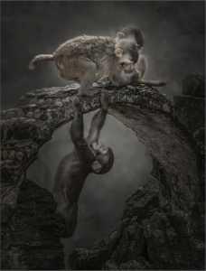 PhotoVivo Gold Medal - Yi Wan (China)  Monkey 84