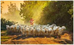 Circuit Merit Award e-certificate - Yan Wong (China)  Shepherd And Sheep