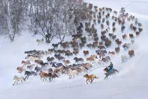 Circuit Merit Award e-certificate - Yuk Fung Garius Hung (Hong Kong)  Snow Horses 3