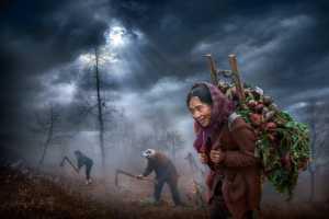 PhotoVivo Gold Medal - Ching Ching Chan (Hong Kong)  Happy Harvest