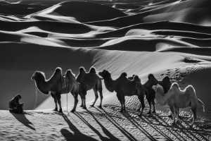 PhotoVivo Gold Medal - Zhiyu Wu (China)  Camels11