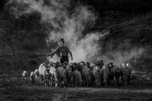 APU Honor Mention E-Certificate - Chanthar Photo (Myanmar)  Goat Herder