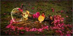 PhotoVivo Honor Mention e-certificate - Thong Tran (USA)  Country Girl 2