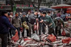 PhotoVivo Honor Mention e-certificate - Pingzhen Wu (China)  Deal