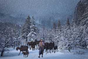 PhotoVivo Gold Medal - Jiahong Zeng (USA)  Herdsman In Snow