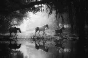 FIP Ribbon - Dibakar Roy (India)  Heaven Of Dream