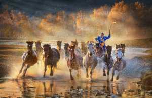 PhotoVivo Gold Medal - Im Kai Leong (Macau)  Herdsman 13