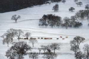 PhotoVivo Honor Mention e-certificate - Fuyong Xu (China)  The Dam Of Winter 5