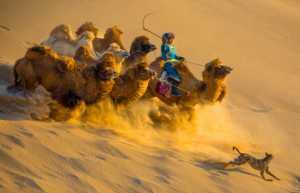 Circuit Merit Award e-certificate - Jijun Sun (China)  Walking In The Desert
