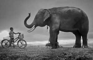 PhotoVivo Gold Medal - Pat Choo (Singapore)  Boy Vs Elephant