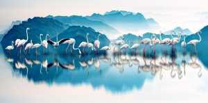 PSK Honor Mention e-certificate - Shenghua Yang (China)  Morning Light Flamingo