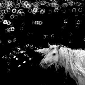 PhotoVivo Gold Medal - Weining Lin (China)  Fine Horse 11