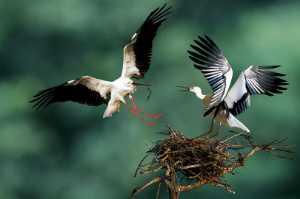 ICPE Honor Mention e-certificate - Deshang Zhou (China)  Nesting