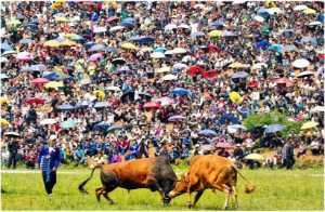 Circuit Merit Award e-certificate - Minhua Xie (China)  Bullfighting Festival