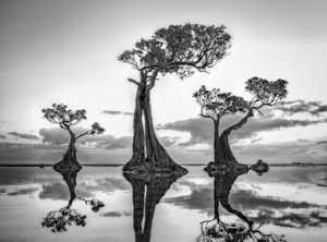 PhotoVivo Gold Medal - Hsiang Hui Sylvester Wong (Malaysia)  Dancing Tree 027