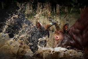 Circuit Merit Award e-certificate - Yinglong Zhou (China)  Bullfight