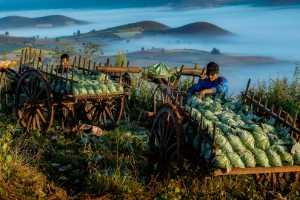 Circuit Merit E-cert - Myat Min Zaw Zaw (Myanmar)  Cabbage-Farmers