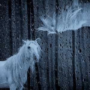 PhotoVivo Gold Medal - Weining Lin (China)  Fine Horse 8