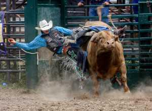 PhotoVivo Honor Mention e-certificate - Ken Murphy (USA)  Unrideable Bull