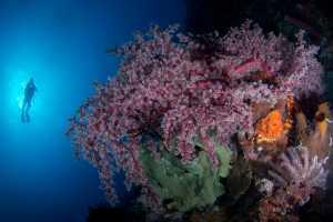 ICPE Gold Medal - Irine Wiguno (Indonesia)  Underwater Serenity