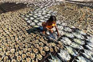 APU Honor Mention e-certificate - Yating Yang (Taiwan)  Dried Fish 2