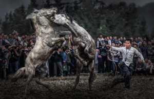 FIP Ribbon - Aihua Cao (China)  Horse Fighting