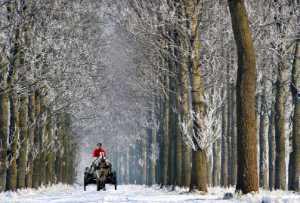 APU Winter Gold Medal - Daniel Lybaert (Netherlands)  Met Paard En Kar