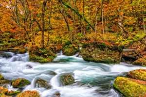 SIPC Merit Award - Kai Hay Clement Law (Hong Kong)  Oirase Gorge In autumn colour