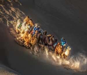 Circuit Merit Award e-certificate - Juanjuan Shen (China)  Camel Team