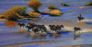 APAS Gold Medal - Chin-Fa Tzeng (Taiwan)  Golden Autumn Xizhou Grazing Horses