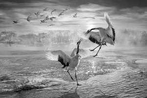 PhotoVivo Gold Medal - Yuk Fung Garius Hung (Hong Kong)  Snow Crane 2