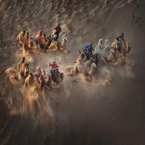 APU Gold Medal - Qingcun Zhang (China)  Camels In Desert