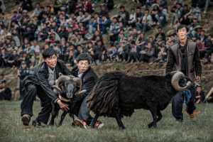 Circuit Merit Award e-certificate - Xiu Liu (China)  Fights Of Sheep