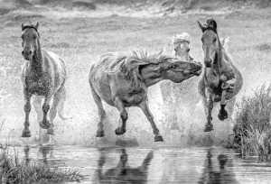 FIP Ribbon - Pengfei Li (China)  Horse Treading On Water