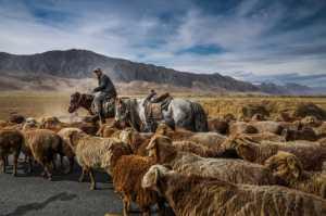 Certificate of Nomination - Wei Gong (China)  Shepherd