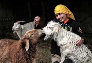 PhotoVivo Gold Medal - Youlin Wu (China)  Shepherdess