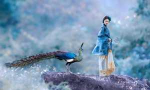 Circuit Merit Award e-certificate - Jiangchuan Tong (China)  The Peacock And The Beauty