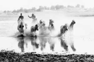 Circuit Merit Award e-certificate - Chinh Ha (USA)  Bw2_1N7a2751 Chasing Horses In Mongolia 2