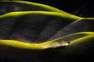 PhotoVivo Gold Medal - Peiwen Sun (China)  Grassland