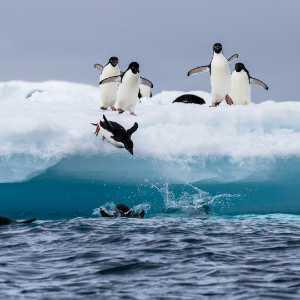 APU Gold Medal - Yong Lin (China)  Penguin Elves 4