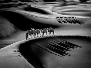 APU Honor Mention e-certificate - Gwolong Chang (Taiwan)  Desert Camel