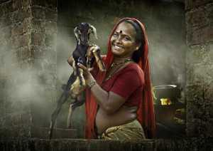 Circuit Merit Award e-certificate - Suresh Bangera (India)  My Goat