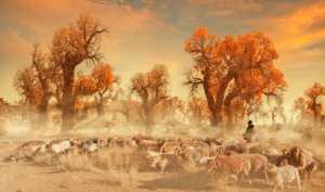PhotoVivo Honor Mention e-certificate - Yanbin Wang (China)  Grazing In Autumn