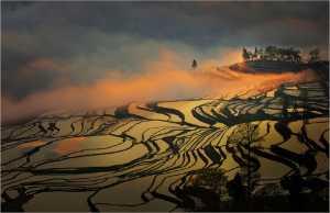 PSA Gold Medal - Yi Wan (China)  Terraced Field 18