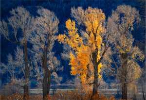 APU Gold Medal - Yi Wan (China)  Autumn Scenery 21